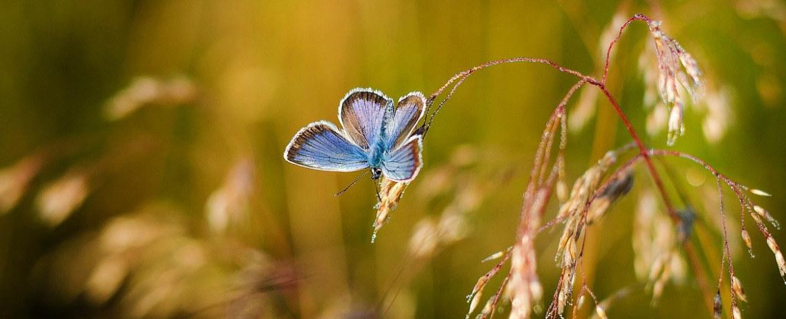 butterfly-1938978_12801
